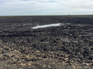 Rain causes farming disaster in the Glades