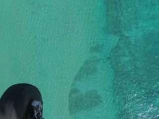 10,000 sharks swarm Palm Beach Co. coast
