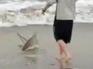 Shark fishing video goes viral, raises questions