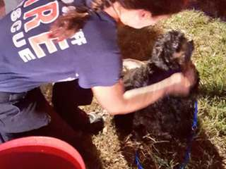 34 dogs rescued from Broward County home