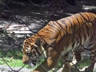 LIVE: Zoo CEO to speak about tiger attack