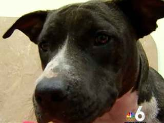 Dog recovering after being shot, left for dead