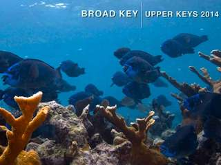 Acidic seawater dissolving bit of Fla. Keys reef