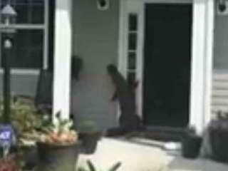 VIDEO: Roaming gator tries to ring doorbell