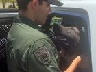 Missing Miami Beach police K-9 found