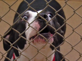 No criminal activity at local animal shelter