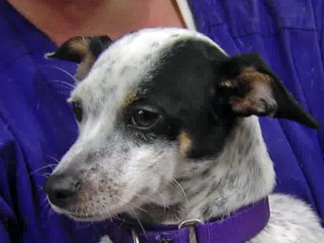 Palm Beach County Dog Rescue