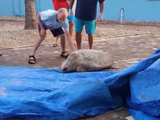 Lost sea turtle rescued