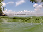 State to test algae blooms on Treasure Coast
