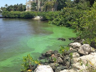 FEMA again rejects algae emergency request