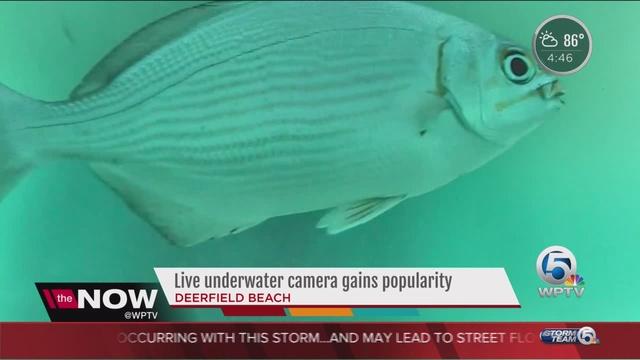 New underwater camera gives live feed from below Deerfield Beach pier