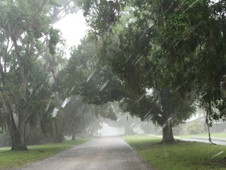 Drivers in Fellsmere urged to use caution