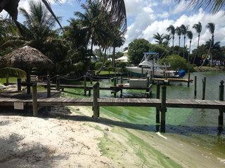 Algae dominates South Fork of St Lucie