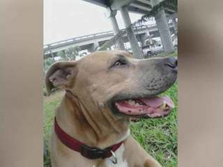 Dog dies saving Florida owner from alligator