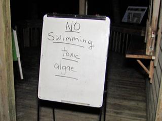 Green algae cancels summer camp activities