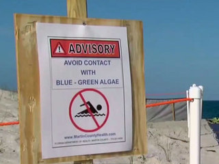 Martin Co. to hold emergency meeting over algae