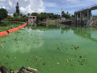 Algae threatens business owners livelihood