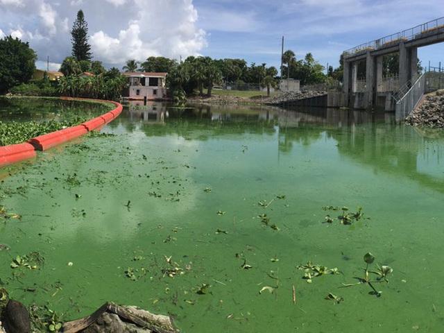 Algae sights and smells threaten business livelihood