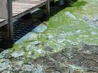 Stench from algae threatening outdoor lifestyles