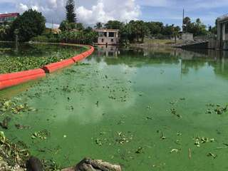 Emergency declared over algae in 2 counties