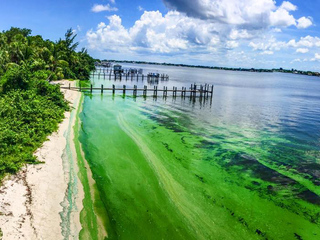 PHOTOS: Blue-green algae spreads