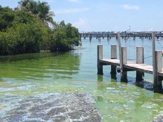 Health concerns rise as algae spreads