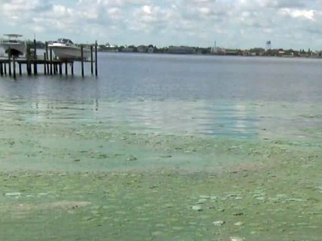 Martin County declares local state of emergency