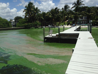Algae stink raised over U.S. Senate candidate