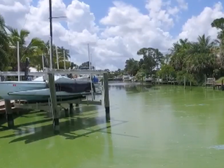 Hotline created to report algal blooms