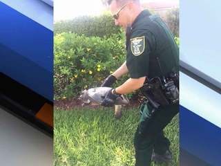 Martin Co. deputy rescues turtle from busy road