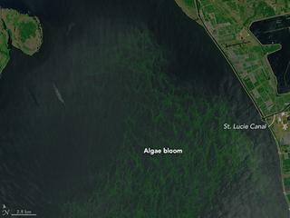 Satellite photo of Lake Okeechobee algae bloom