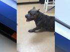 Possibly rabid dog left at shelter