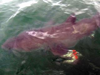 Little boy catches BIG shark