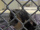St. Lucie Co. Humane Society in financial crisis