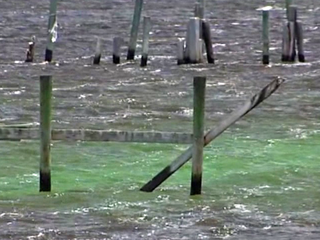 Algae crisis raises awareness, creates problems