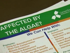 Agency helping businesses affected by algae