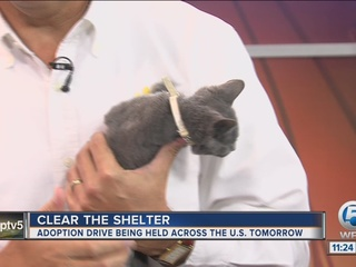 Clear the Shelters finding homes for animals