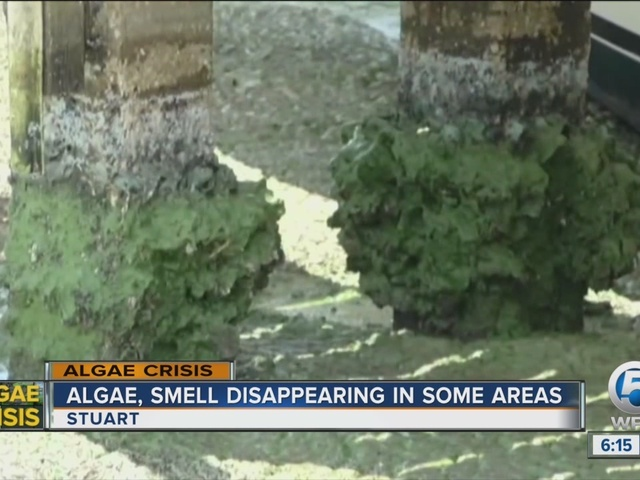 Algae, smell disappearing in some areas on the Treasure Coast