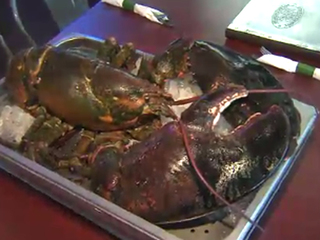 Spared lobster dies during trip from FL to Maine