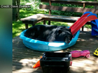 Black bear caught cooling off in kiddie pool
