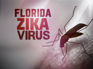 Additional Zika cases likely from FL mosquitoes