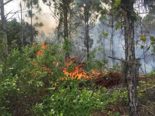 Fire scorches dozens of acres in Indian River