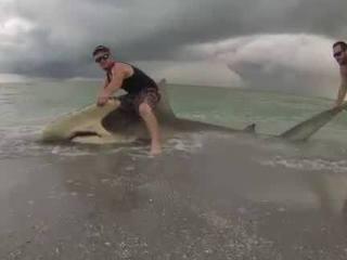 Trio reels in, releases 13-foot hammerhead shark