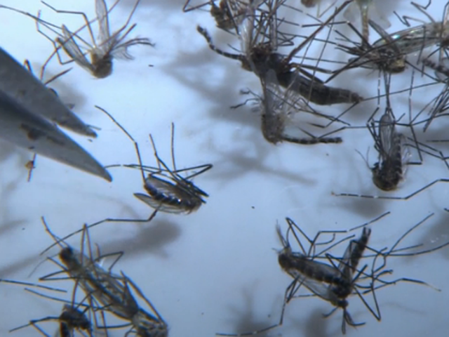 1st Zika-Related Infant Death in Texas Confirmed