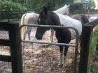 Loxahatchee equestrians on alert