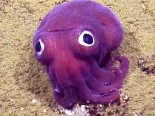 Googly-eyed squid is the cutest thing ever!