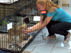 40+ dogs rescued from Mississippi puppy mill