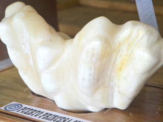 Fisherman hid 75-pound pearl for a decade