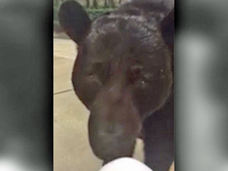 Fla. woman comes face to face with a bear