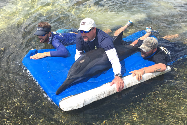 Dolphins found stranded in Keys, possibly due to storm
